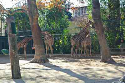 Le Zoo de Lisbonne - Portugal