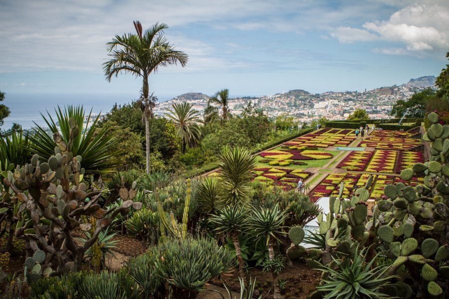 Les parterres du jardin botanique de Funchal - Madère
