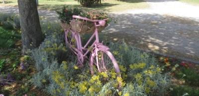 vélo rose dans les jardins de la ville - Zadar