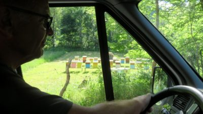 Beaucoup de ruches sur la route entre Podgorica et Zabljak - Monténégro