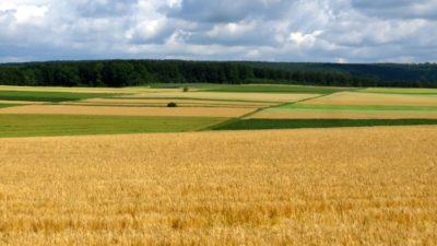 Des champs de blé sur la route en Allemagne