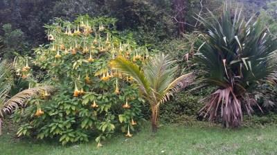 Fleurs sauvages au Grand Etang (Réunion)
