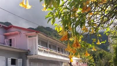 Datura Vacoas à Hell-Bourg