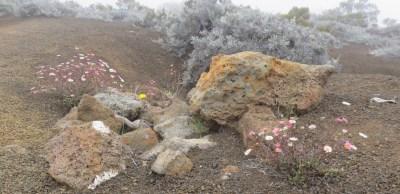 Fleurs sauvages au Pas des Sables