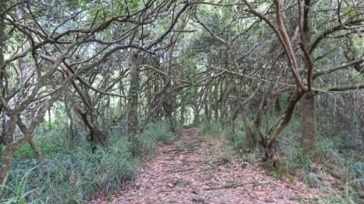 Forêt de tamarins - Réunion