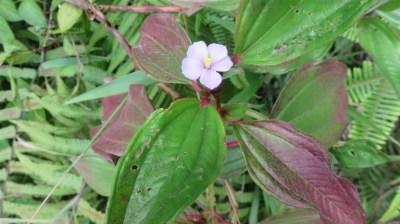 Fleurs tropicales - Réunion