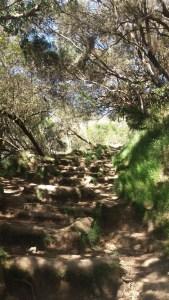 Forêt de tamarins - Mafate (Réunion)