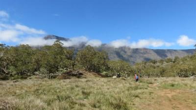 La plaine des Tamarins - Cirque de Mafate (Réunion)