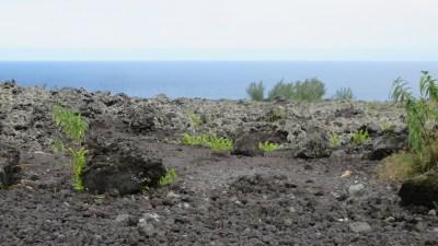 Dans l'enclos du Grand Brûlé - Réunion