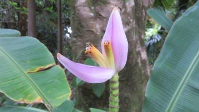 Au jardin des parfums et des épices - Forêt de Mare Longue (Réunion)