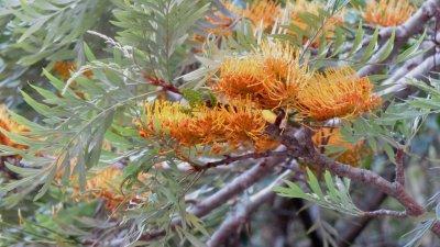 Végétation locale - Réunion