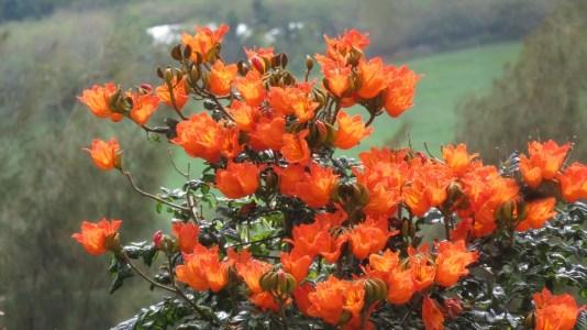 FLeurs sauvages - Etang St Leu