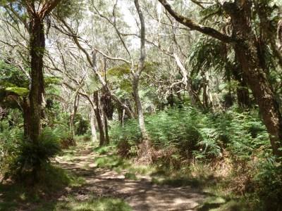 La forêt de Tévelave - Réunion