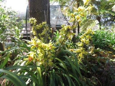 Le jardin tropical de Monte Palace (Funchal - Madère)
