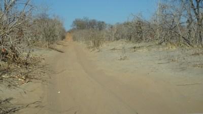 La piste très sableuse entre Kachikau et la Goha Gate - Botswana