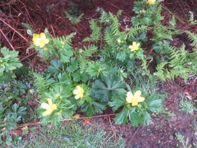 Flore de la Levada des 25 sources - Madère