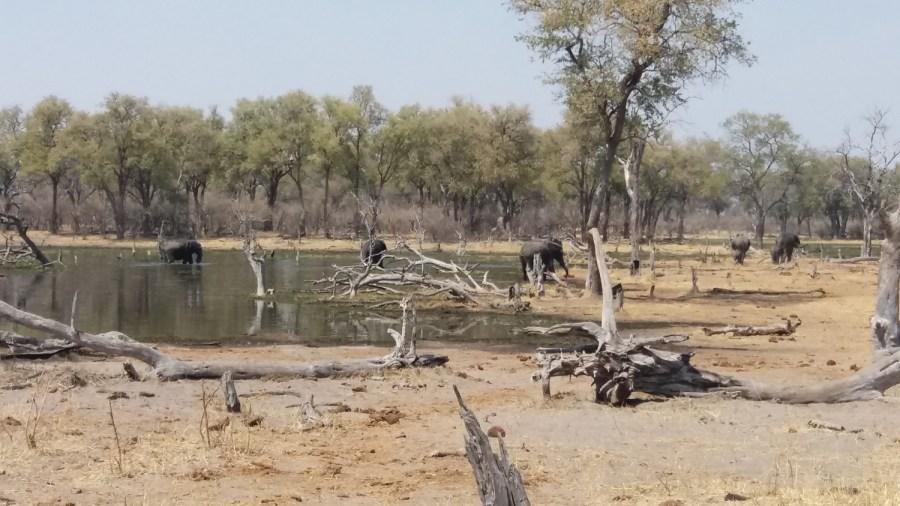 Eléphants au bord de la rivière Khwai -campsite de Mbudi (Botswana)