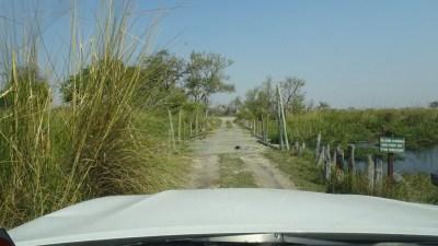 The Third Bridge - Réserve de Moremi (Botswana)