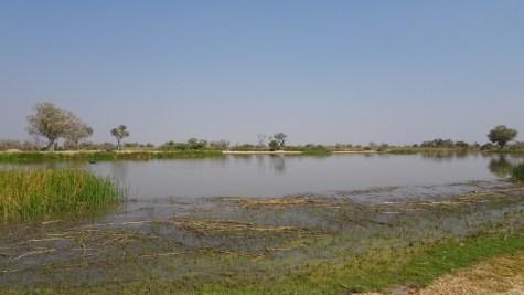 Paradise Pools - Réserve de Moremi (Botswana)