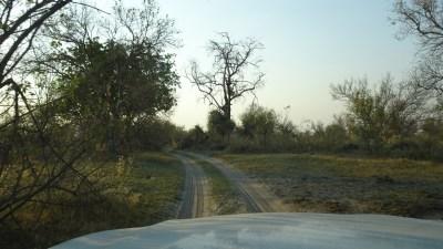 Piste dans la Réserve de Moremi (Botswana)