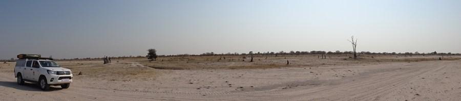 Paysage plat de la Réserve de Moremi (Botswana)