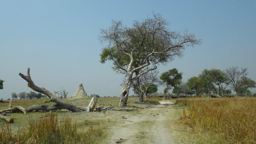 Paysage de la Réserve de Moremi (Botswana)
