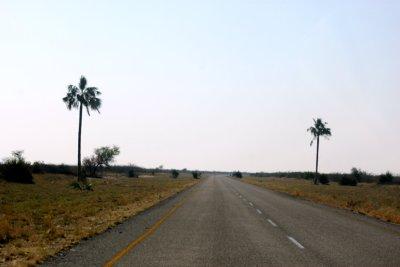 Sur la route entre Khumaga et Motopi (Botswana)
