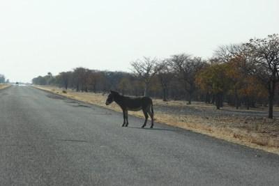 Sur la route entre Nata et Kasane - Botswana