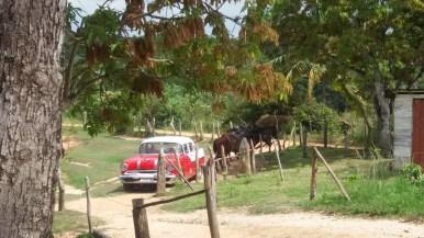 Balade à cheval dans la vallée de Vinales - Cuba
