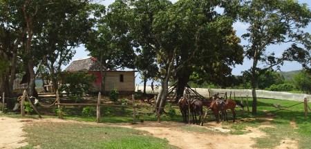 Balade à cheval dans la campagne de Vinales (Cuba)