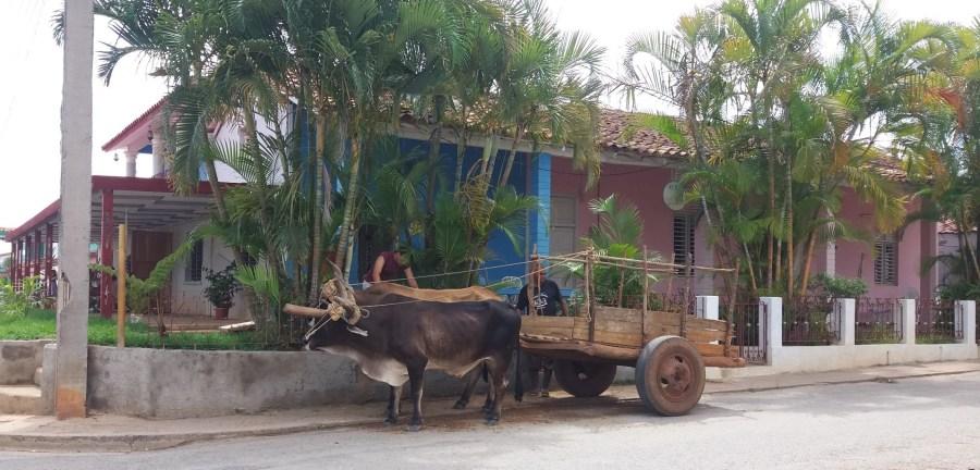 Char à boeufs à Vinales - Cuba