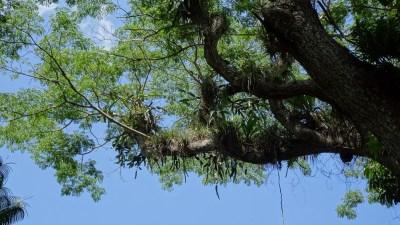 La flore et la végétation du jardin botanique Orquideario de Soroa - Cuba