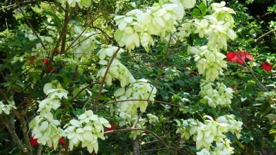 La flore du jardin botanique Orquideario de Soroa - Cuba