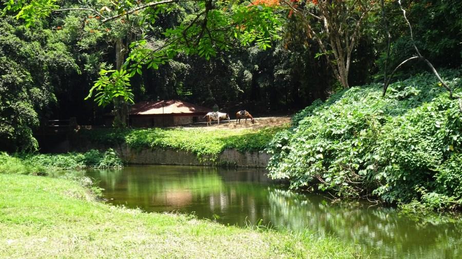 Chevaux au bord de la rivière Manantiales - Soroa (Cuba)