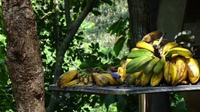 Fruits dans la forêt humide de Soroa - Cuba