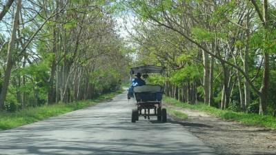 Charrette à cheval sur la route vers le jardin botanique de Cienfuegos - Cuba