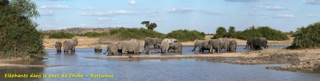 Eléphants dans le parc de Chobe - Botswana