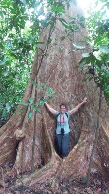 Arbre gigantesque dans la forêt tropicale du parc National Carara - Costa Rica