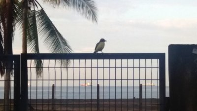 Vue sur la mer à l'aube - El Roble (Costa Rica)