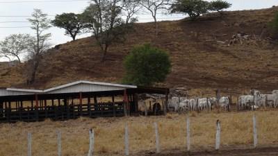 Paysage sur la route du parc du volcan Tenorio (Costa Rica)