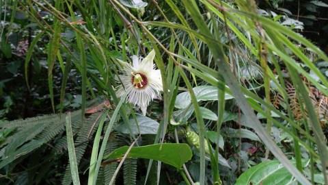 Plantes tropicales dans la réserve Bosque Nuboso de Santa Elena - Costa Rica