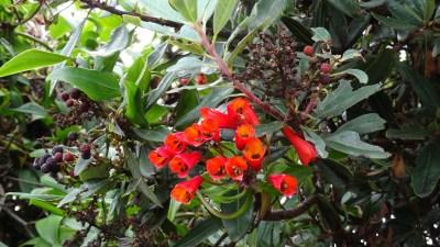 La flore du parc du volcan Irazu - Costa Rica