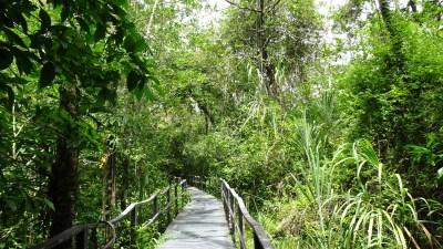 Un sentier du parc de Cahuita - Costa Rica