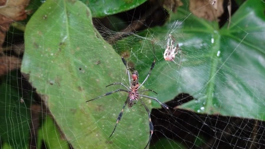 Une araignée du parc de Cahuita - Costa Rica