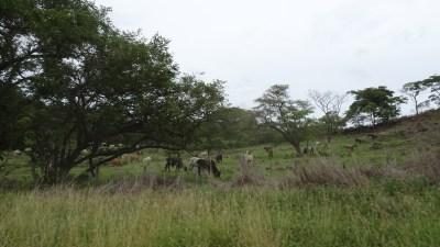 Sur la route du parc de Palo Verde depuis Puntarenas - Costa Rica