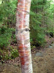 Randonnée dans le Parc National de la Jacques Cartier - Québec