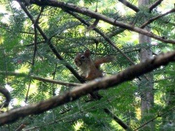 Dans la forêt de la chute Archambault - Québec