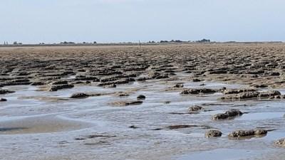 Le bord de mer - Les Moutiers-en-Retz