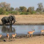 Le parc Kruger (Afrique du Sud)