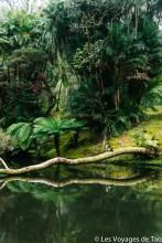Les voyages de Tao Sao Miguel Açores-50